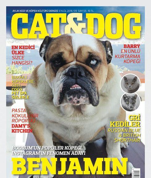 Lezzetli köpek gıdalarının sırları: Brit köpekler için yemek